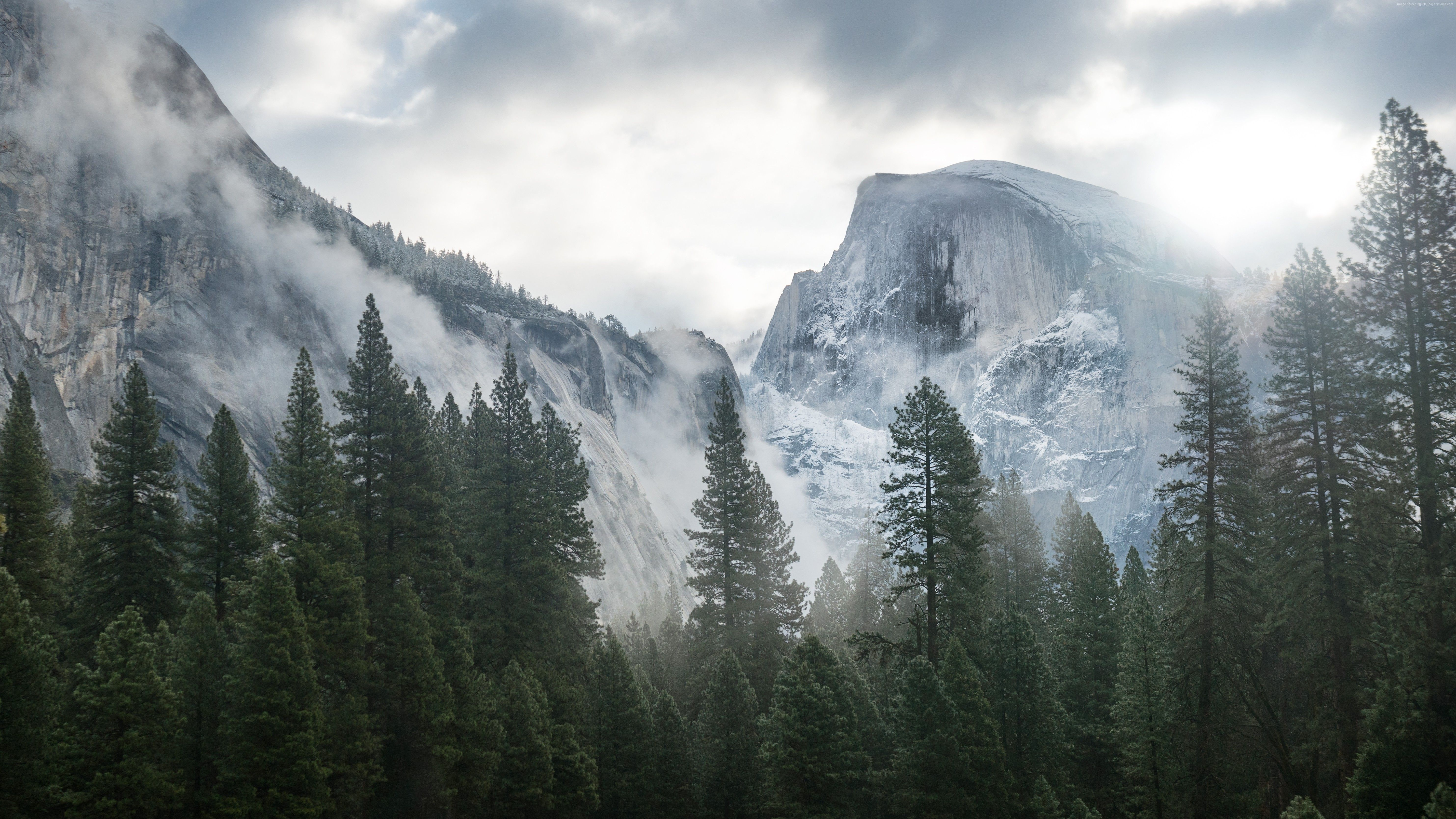 Yosemite Wallpaper Nature Forest Yosemite 5k