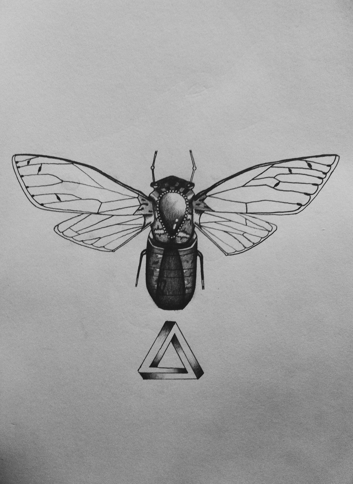 Small Flying Bugs In Bedroom Flying Insect Diagram As A Tattoo Ink Pinterest Insect