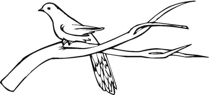Tree Branches Printable Coloring Pages Coloring Pages Printable Coloring Pages Cartoon Coloring Pages