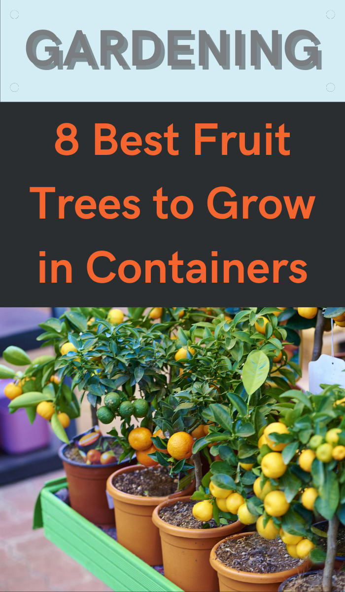 8 Best Fruit Trees To Grow In Containers Gardening Sun In 2020 Fruit Trees Gardening For Beginners Growing Vegetables In Pots
