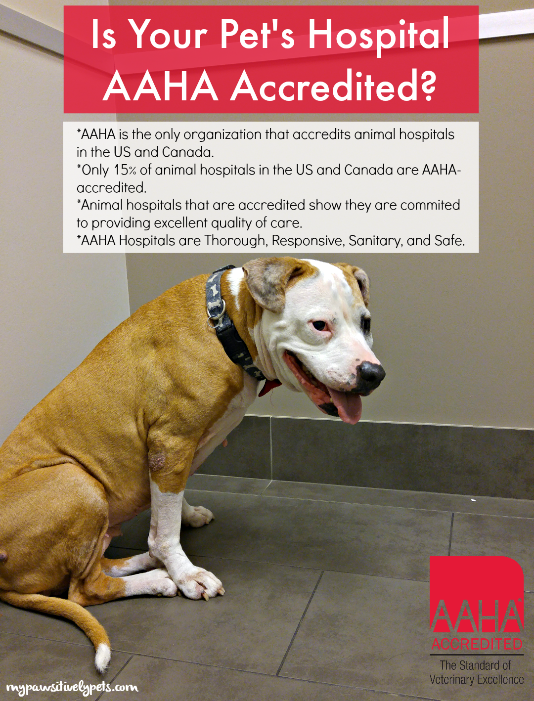Is Your Pet's Hospital AAHAAccredited? (With images