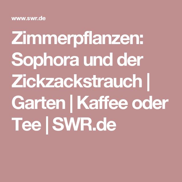 Zimmerpflanzen Sophora Und Der Zickzackstrauch Garten Kaffee