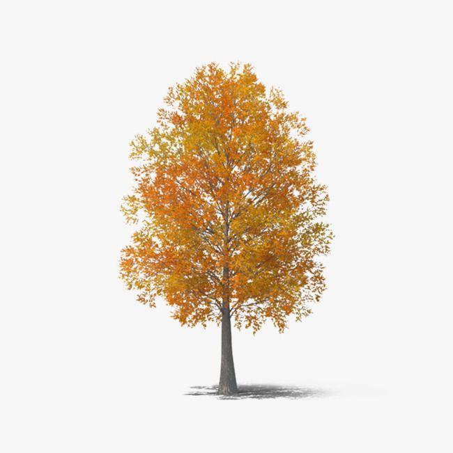 Fall Tree Bleak Illustration Autumn Clipart Tree Clipart Fall Trees Photography Autumn Trees Tree Photoshop
