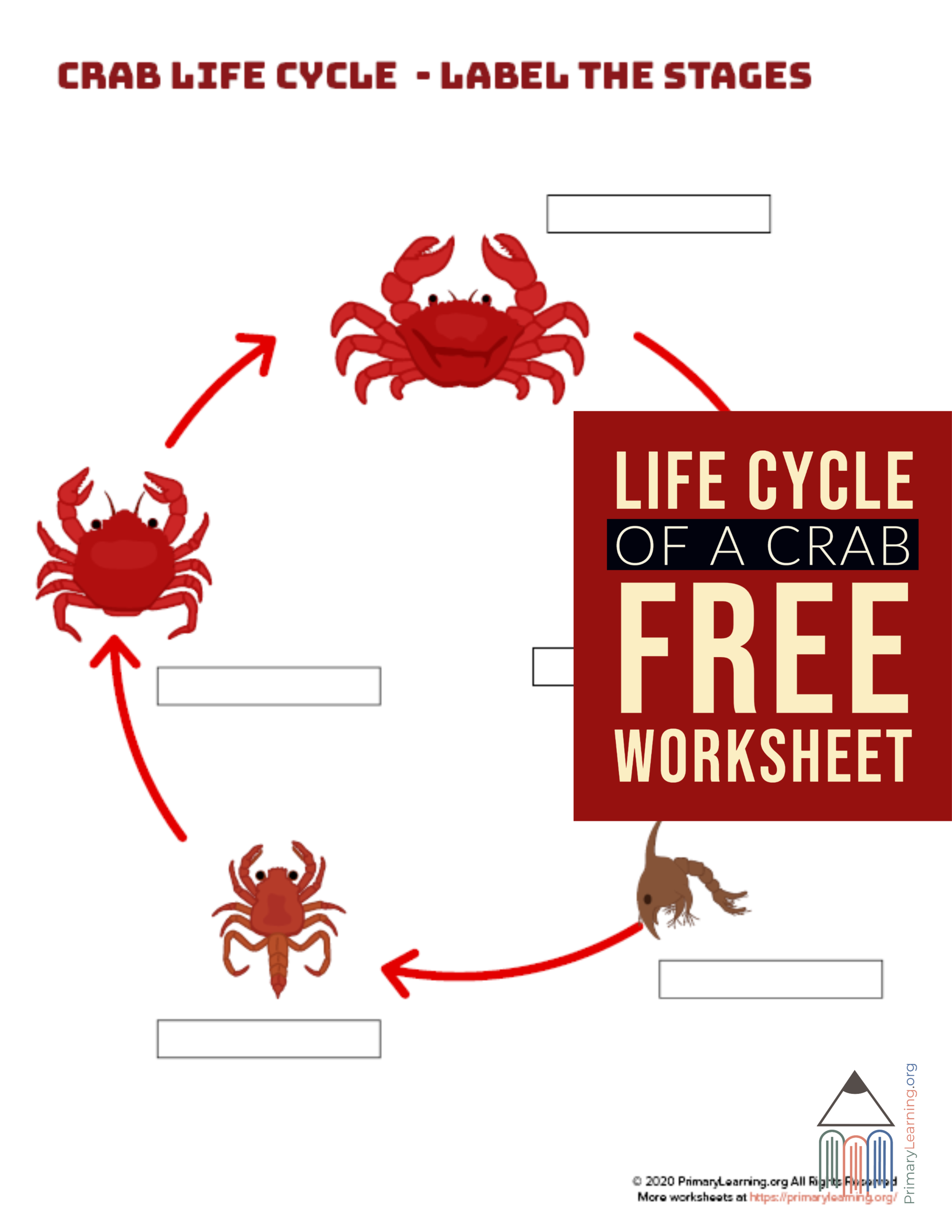 Students Use This Worksheet To Label The Stage Of Crab