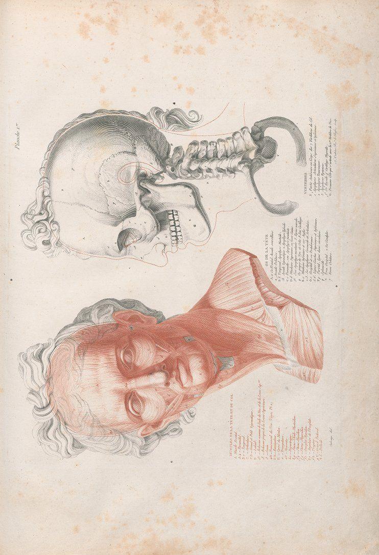 SALVAGE, Jean Galbert (1770-1813). Anatomie du Gladiateur combattant ...