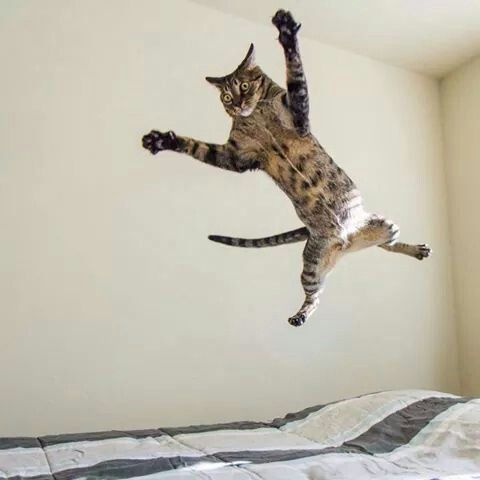 Pin by Sarah Kay on Flying cat super cat Crazy cats
