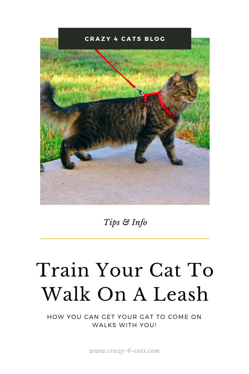 How To Train Your Cat On A Leash In 2020 Cat Leash Cat Theme Adventure Cat