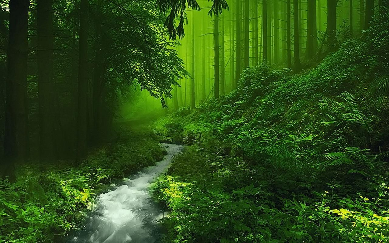 Beautiful Forest HD Image
