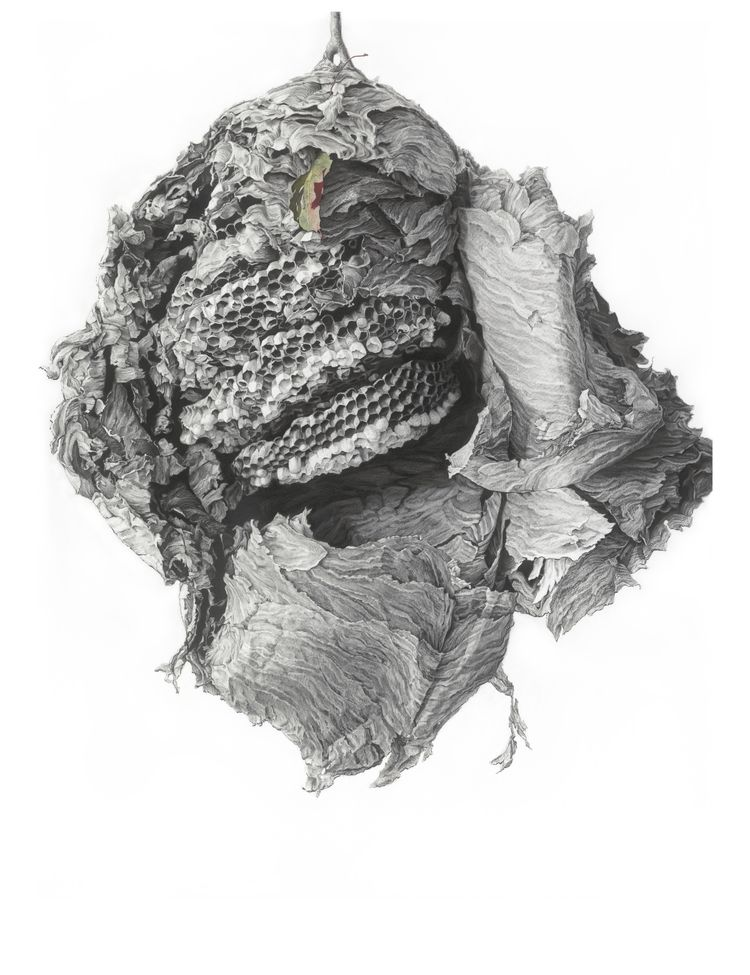 """Huguette Despault May, Mother Ship, 2011    55"""" x 44"""", charcoal and pastel on paper"""