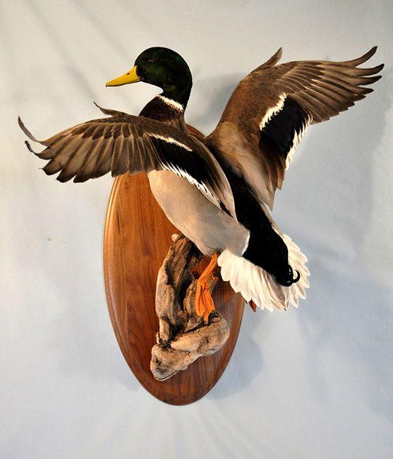 Ducks Unlimited Home Decor: Mallard Duck Pair Mounts - Google Search
