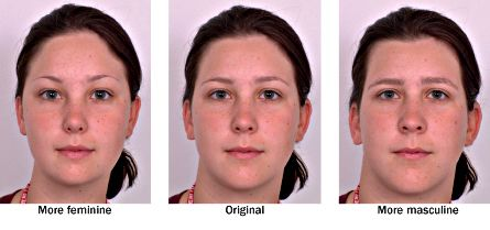 Feminine face characteristics