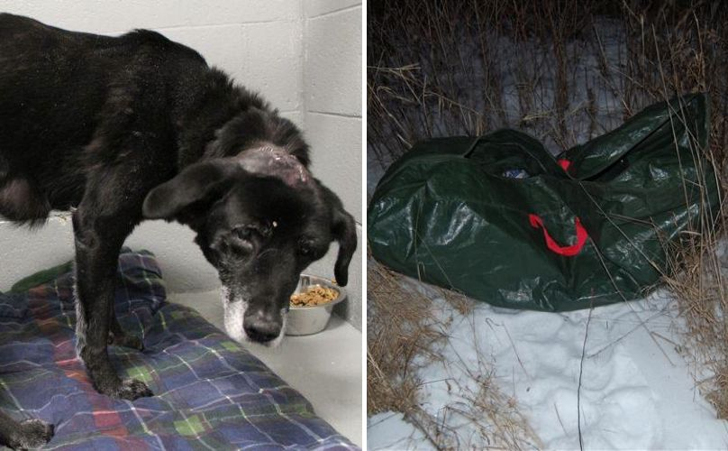 Wounded And Abandoned Dog Hidden In Duffle Bag Gets The Love And Justice She Deserves