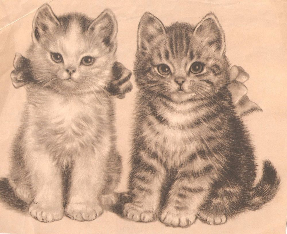 kittens cats print brother u0026 sister needs tlc meta pluckebaum so