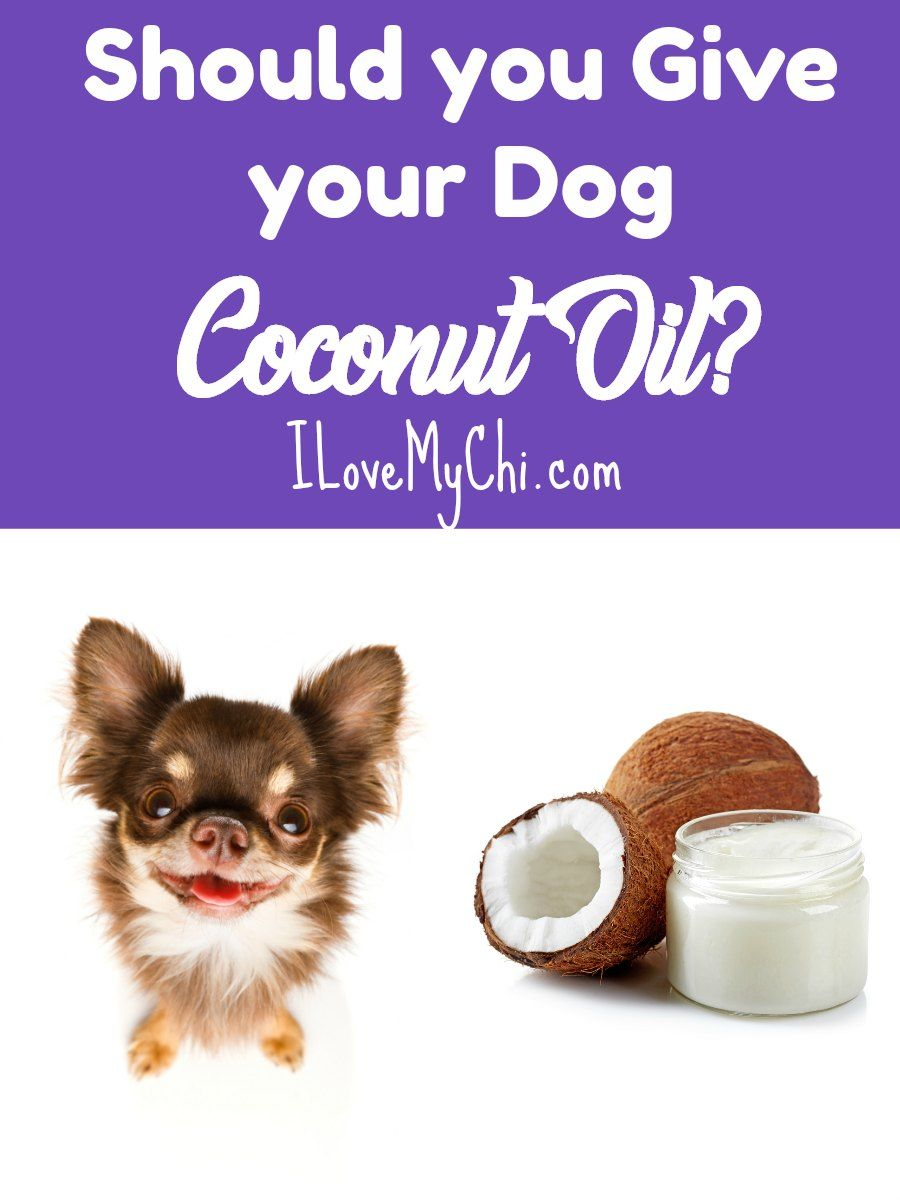 Should You Give Your Dog Coconut Oil Sick Pets Big Dog Little