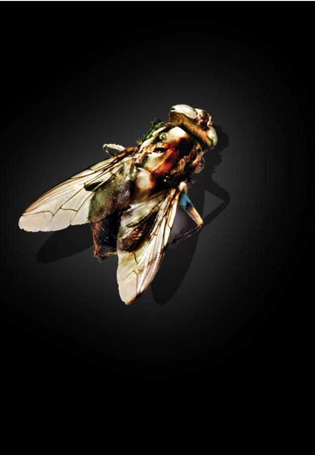 映画] The Fly 1986 無料視聴 吹き替え