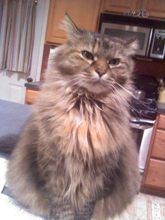 Evelyn Romano Alosso Ct Lost Pets Fluffy Https Www Facebook Com