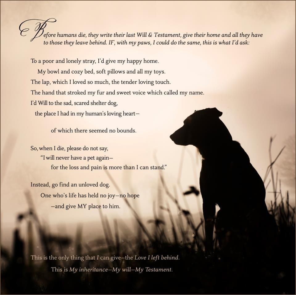 a dogs last will amp testament this is so sad but i feel