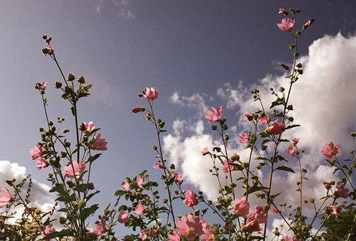 ॐ Julia ॐ Flower aesthetic, Aesthetic desktop wallpaper