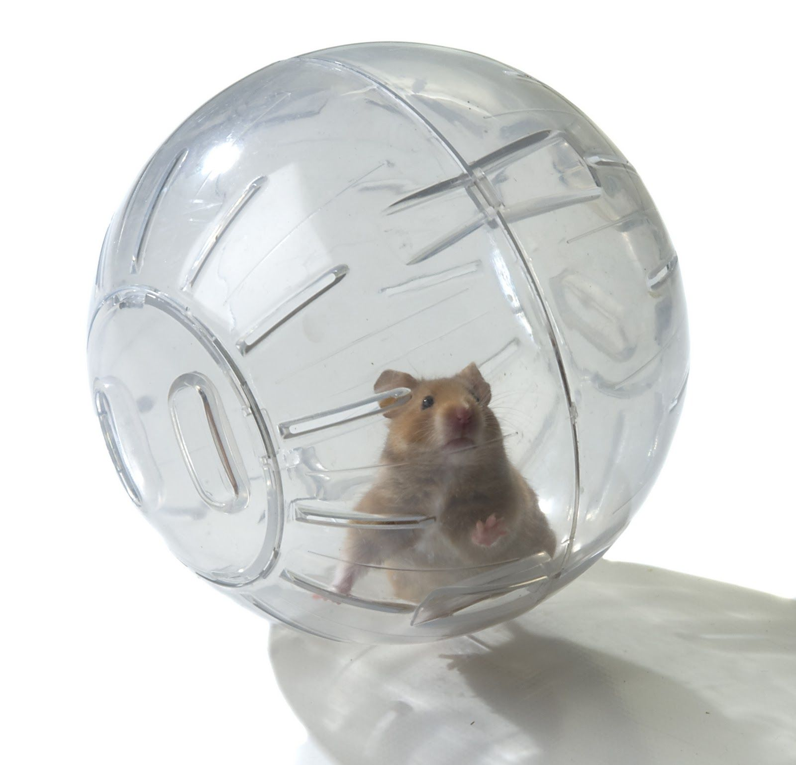 Hamster In A Ball Makes Me Laugh Right Out Loud Hamster Baby Hamster Love Your Pet Day