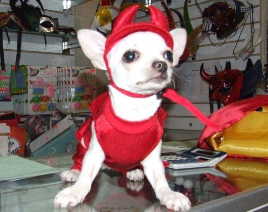 Disfraz De Angel Para Perro Buscar Con Google Disfraces Para Perros Disfraces De Animales Perros