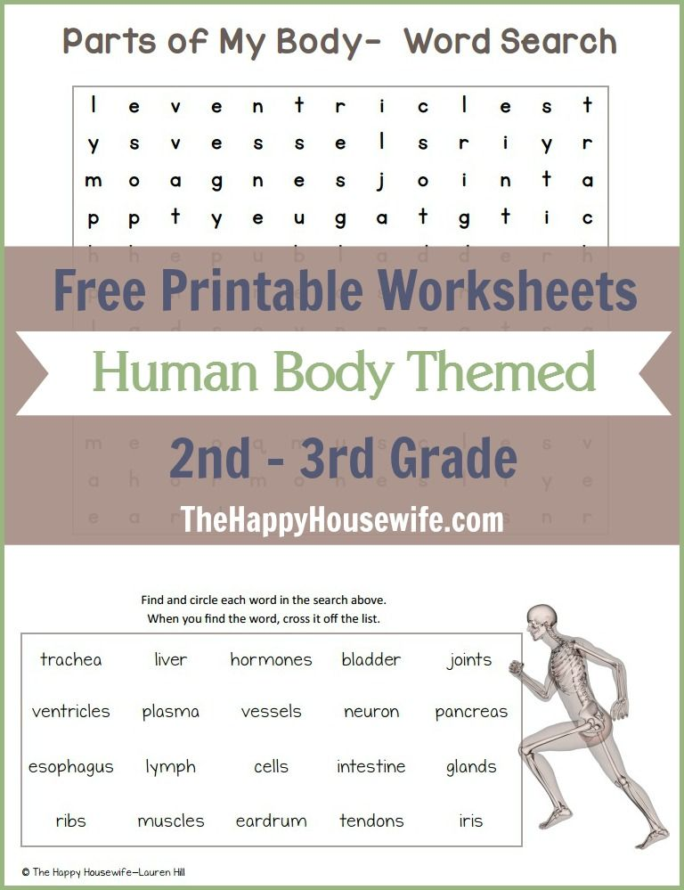 Human Body Themed Worksheets Free Printables Pinterest Art