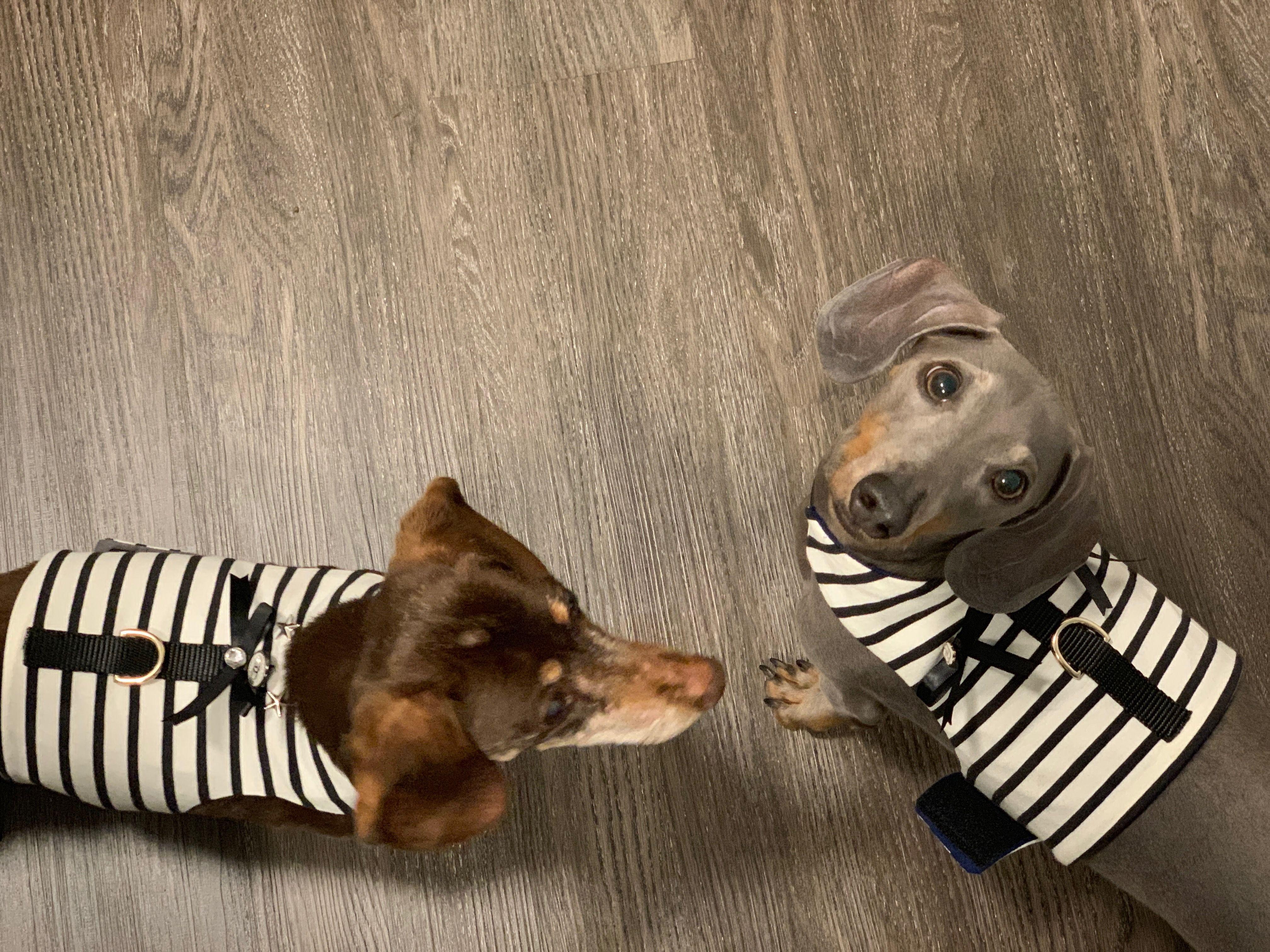 Vintage Cc Button Designer Dog Jacket No Choke Dog Harness