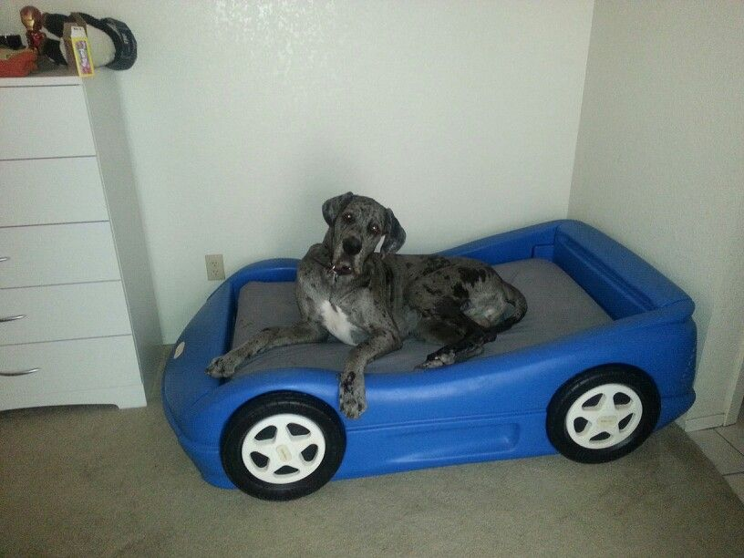 Toddler race car bed. Perfect for big dogs bed and cheap to buy ...