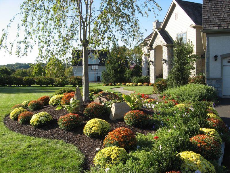 Mum Garden For Fall Color Www Stonecreeklandscaping Net Garden Design Front Yard Landscaping Garden Landscaping