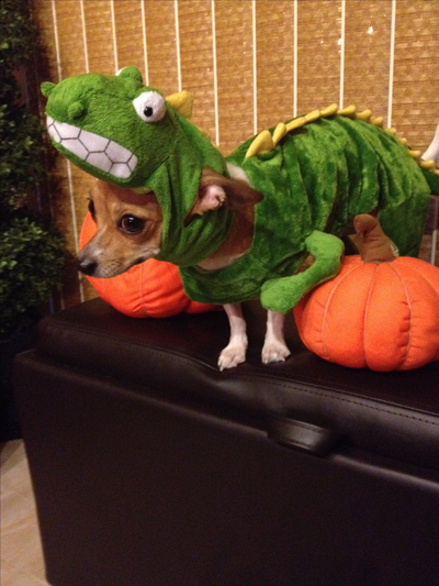 Please vote for this entry in The DogVacay Howl-o-ween Photo Costume Contest!
