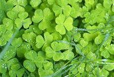 Irish - Bing Images
