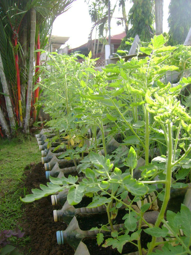 Small yard container gardening: to be multiplied for all ...