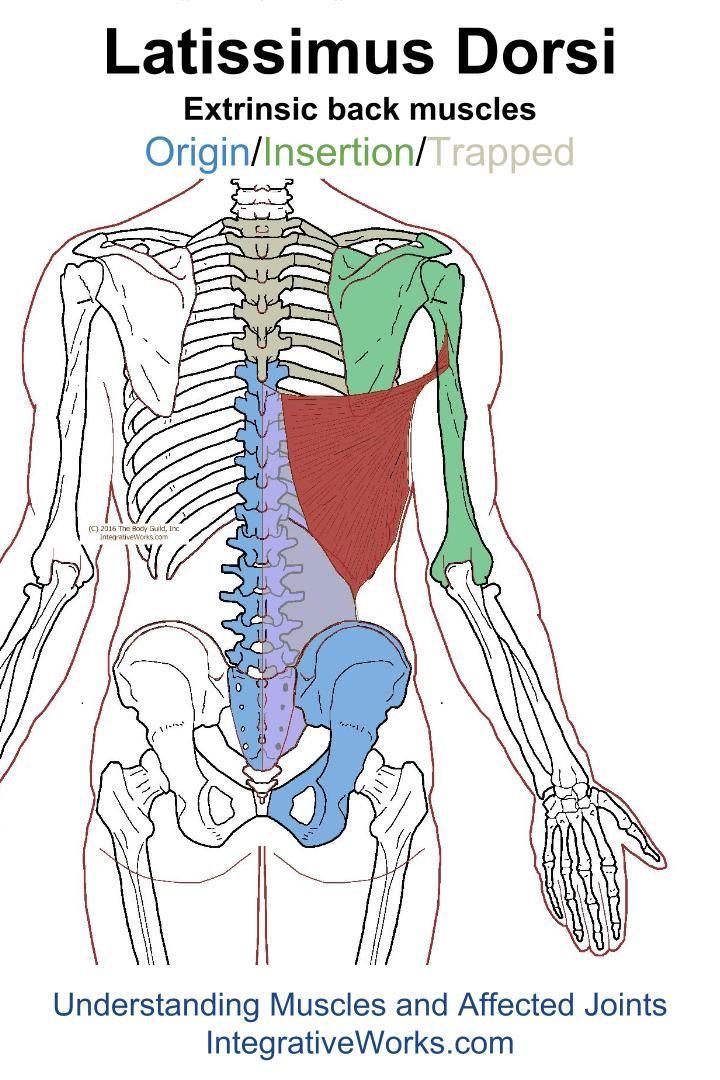 Trigger Points – Sharp Pain in Front of Shoulder | Músculos ...