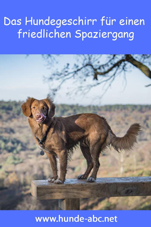 Fur Viele Hunde Und Ihre Halter Erweist Sich Ein Hundegeschirr Beim Spaziergang Als Wesentlich Angenehmer Als Ein Halsband Ob In 2020 Hundegeschirr Hunde Hundehutte