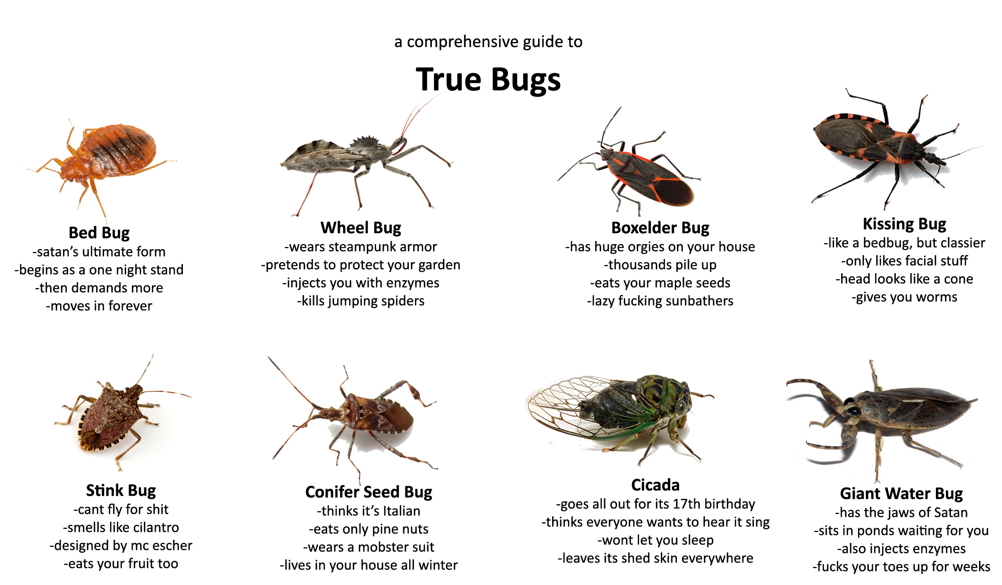 Know your Bugs Steampunk armor, One night stands, Rhetoric