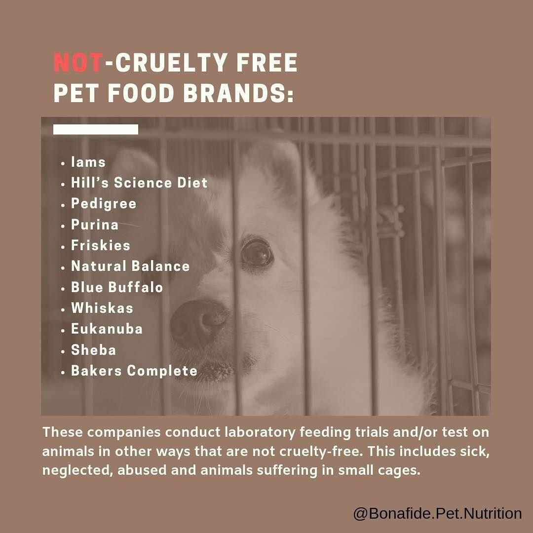 Pin By Bonafide Pet Nutrition On Bonafide Pet Nutrition Animal Nutrition Food Animals Human Food