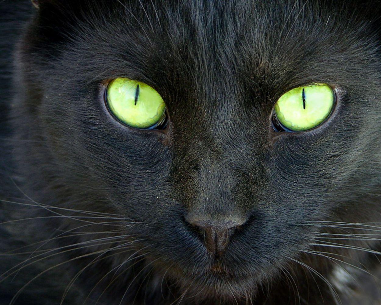 Cat Black N White Widescreen HD Wallpaper Pet shop