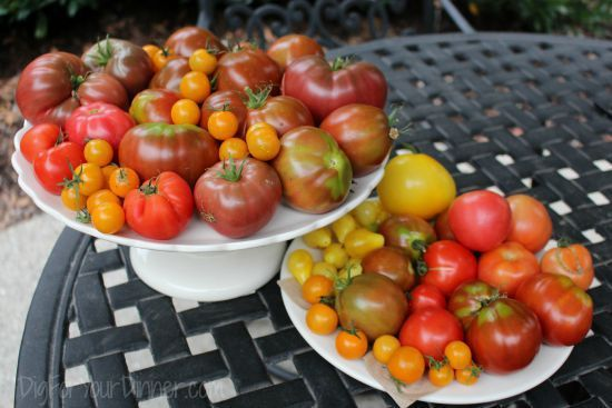 Planting Guide – Starting Tomatoes from Seed