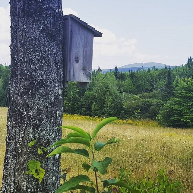 Oh the view. ...#maine #newengland #birdhouse