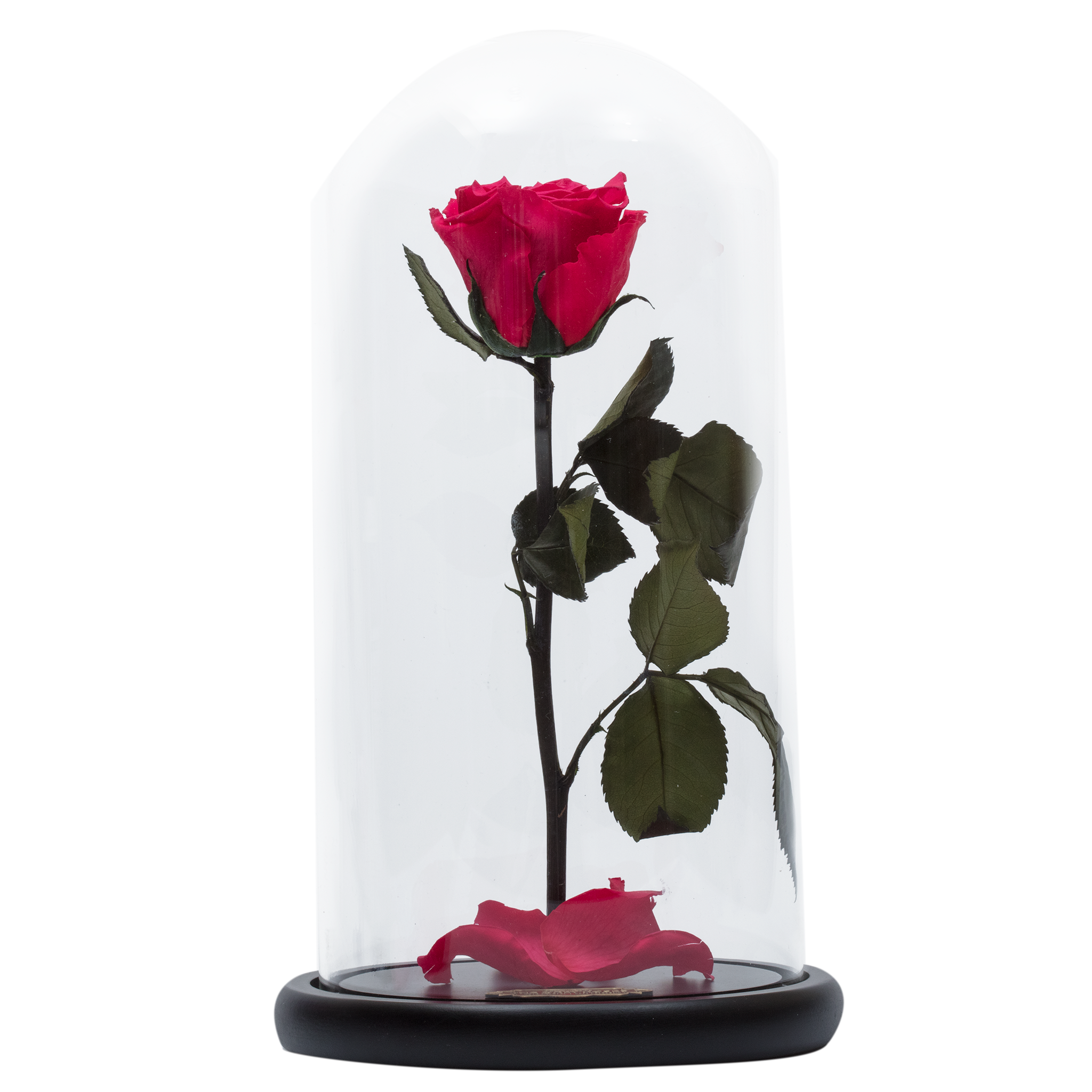 2018 NEW Beauty and the Beast Red Rose in Warm White LED