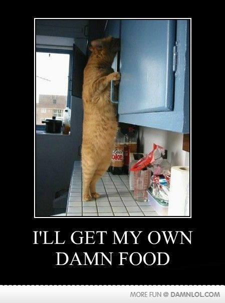 My cat. For reals.