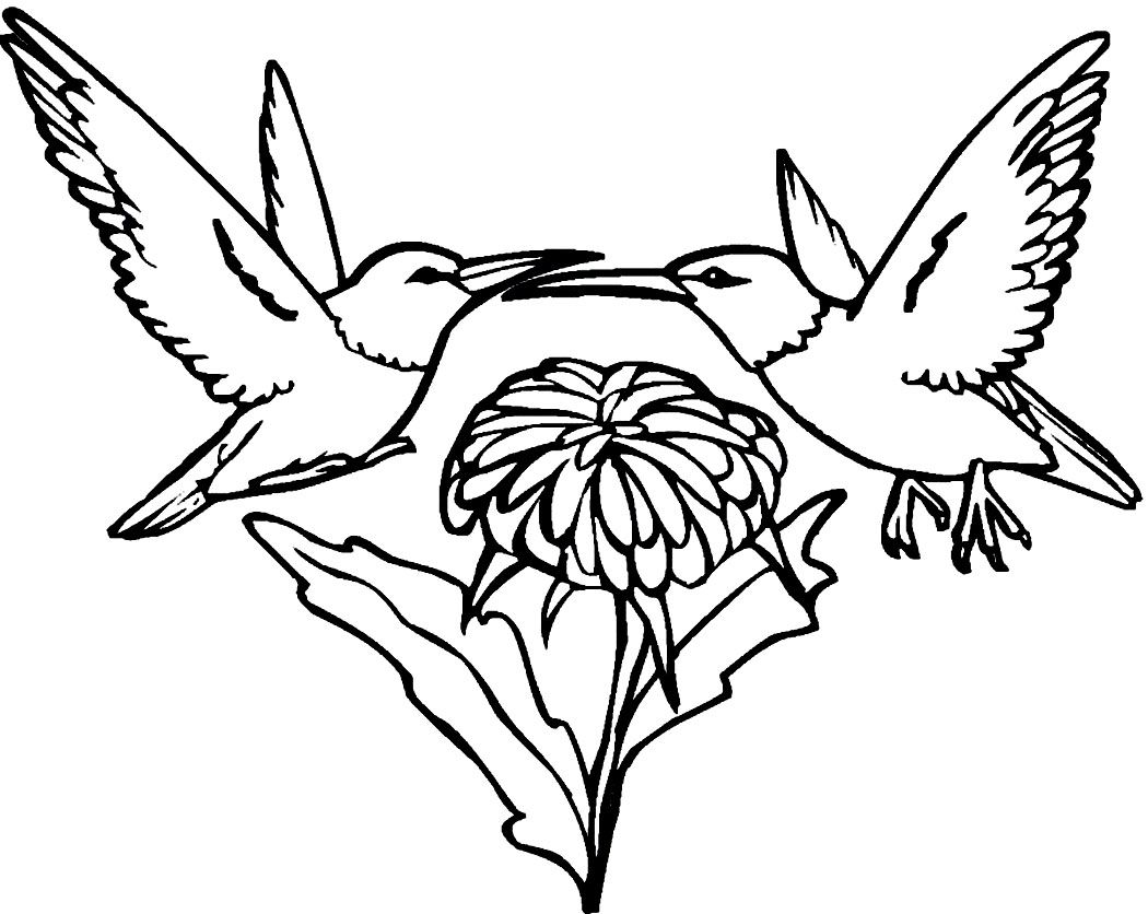 Free Printable Hummingbird Coloring Pages | crafts | Pinterest