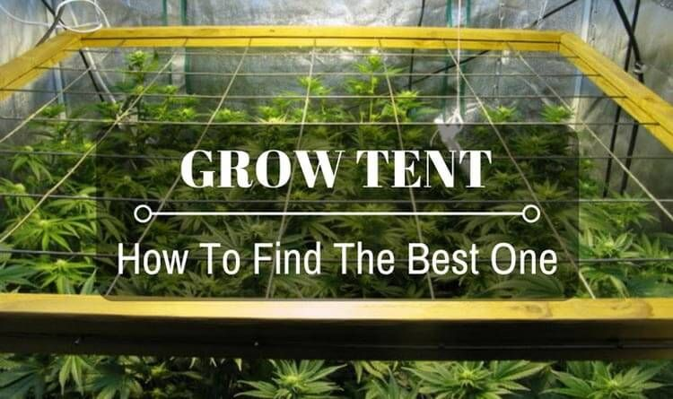 Best Grow Tents In 2020 Top Reviews Buying Guide Grow 640 x 480