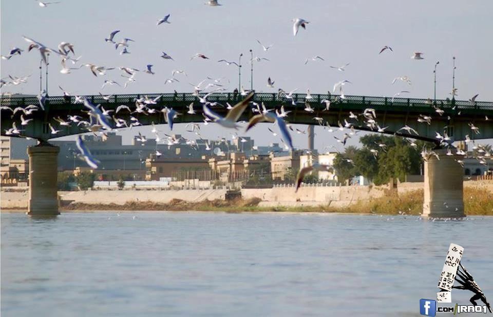نوارس دجله Tigris River And Gulls Baghdad Baghdad Baghdad Iraq Scenery