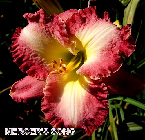 Mercers song beautiful flowers even more pinterest songs mercers song tropical flowersred flowerspretty mightylinksfo