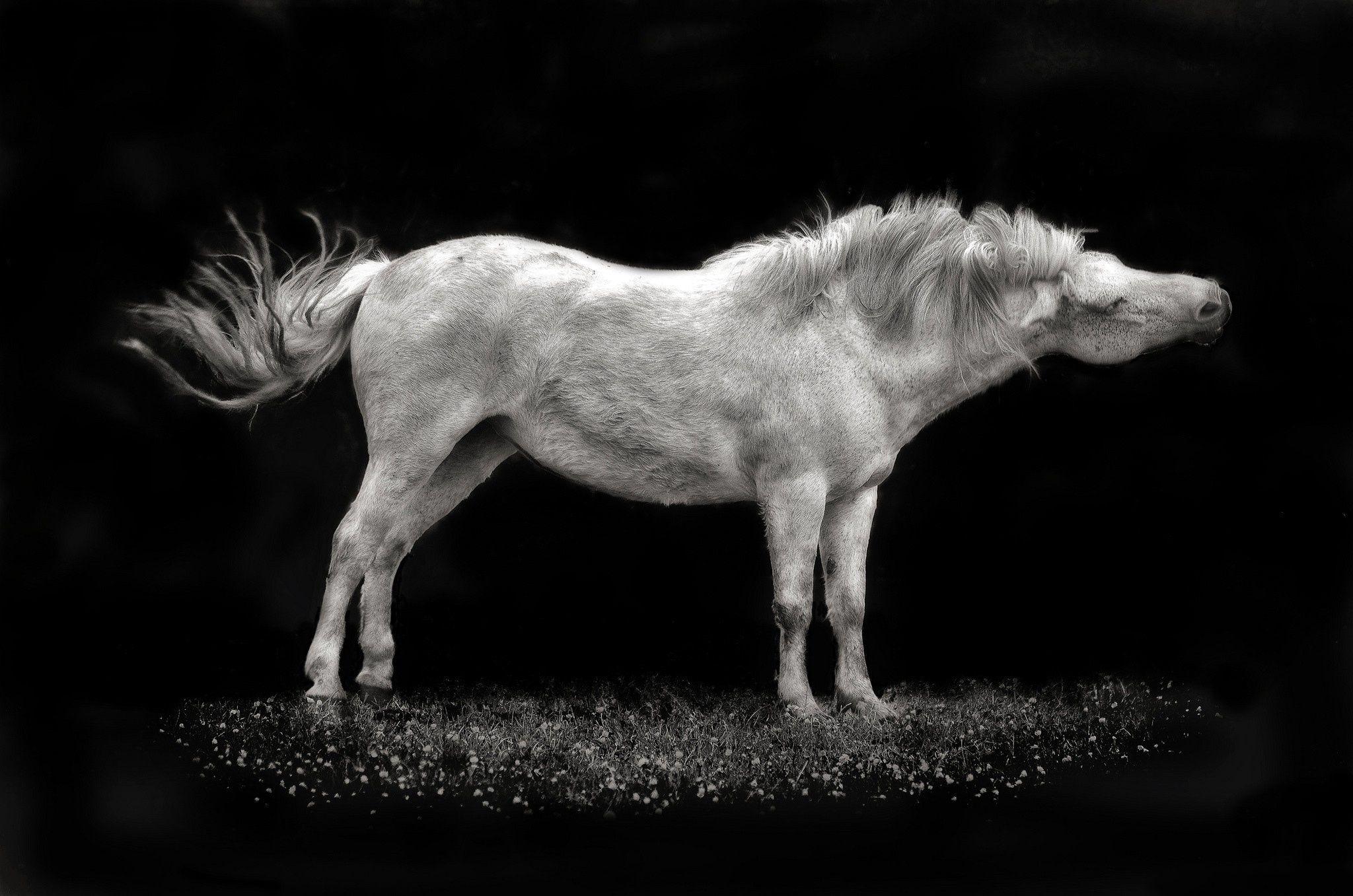Výsledek obrázku pro Kůň Horses, Animals, Computer wallpaper