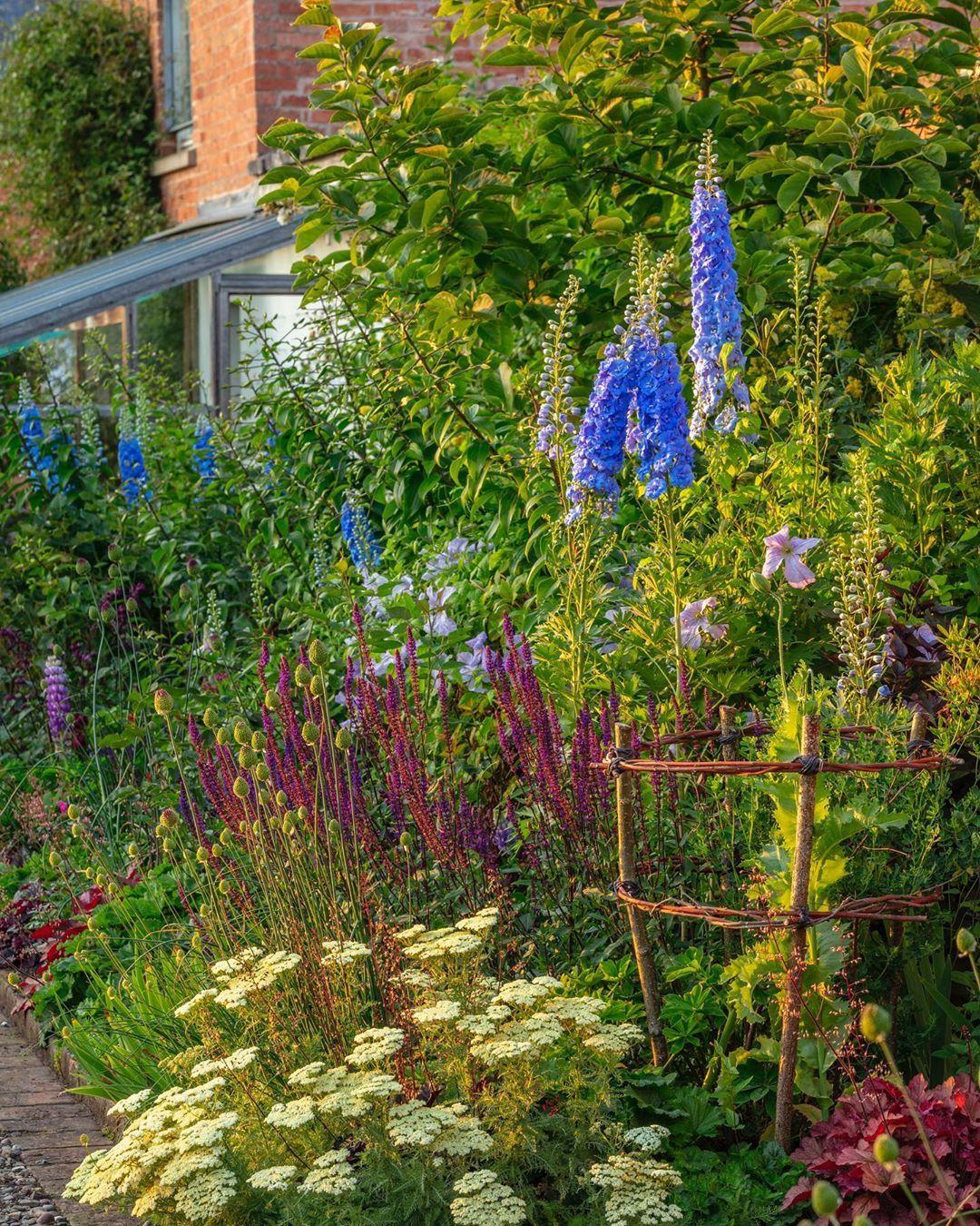 Morton Hall Gardens On Instagram Romance In The Kitchen Garden Achillea Nobilis Neilreichii Glowing In The Evening Sun Comp In 2020 Salvia Kitchen Garden Instagram