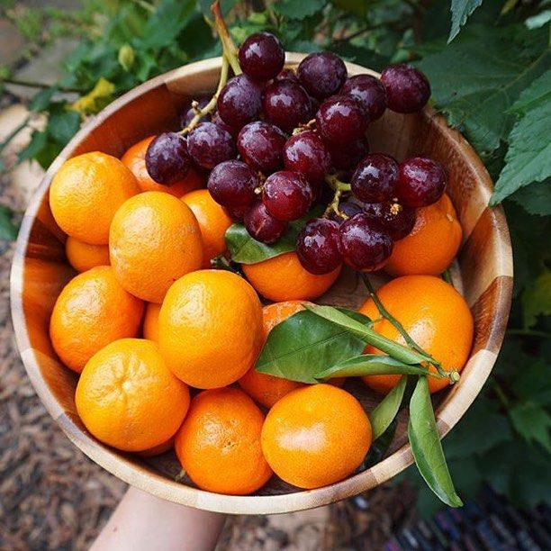 A beautiful picture as a reminder of summer which is faaaaaaaar away! How's the weather treating you in your neck of the woods? #cleaneating #dessert #delicious  #eatrealfood #fit #grapes #fruit #glutenfree #healthy #love #nutrition #organic #paleo #plantbased #rawvegan #smoothie #vegan #superfood #fitnessmodel #veganfoodshare #veganathlete #vegansofig #kitchenbowl #healthtreatsfeature #bestofvegan #petitejoys #livethelittlethings #summerfruit