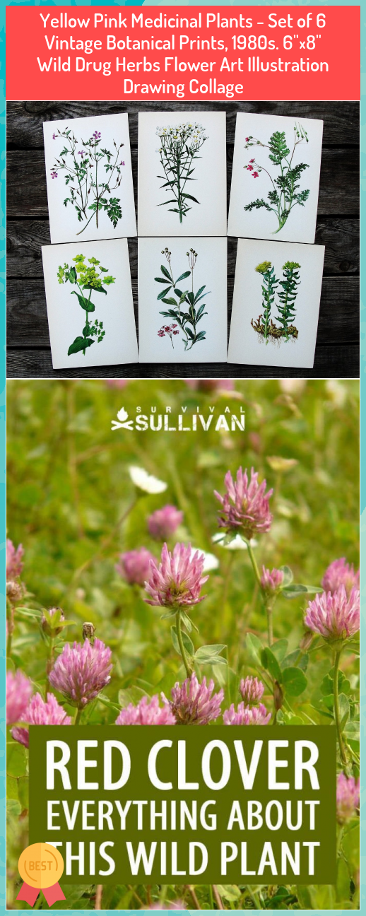 Yellow Pink Medicinal Plants - Set of 6 Vintage Botanical Prints, 1980s. 6