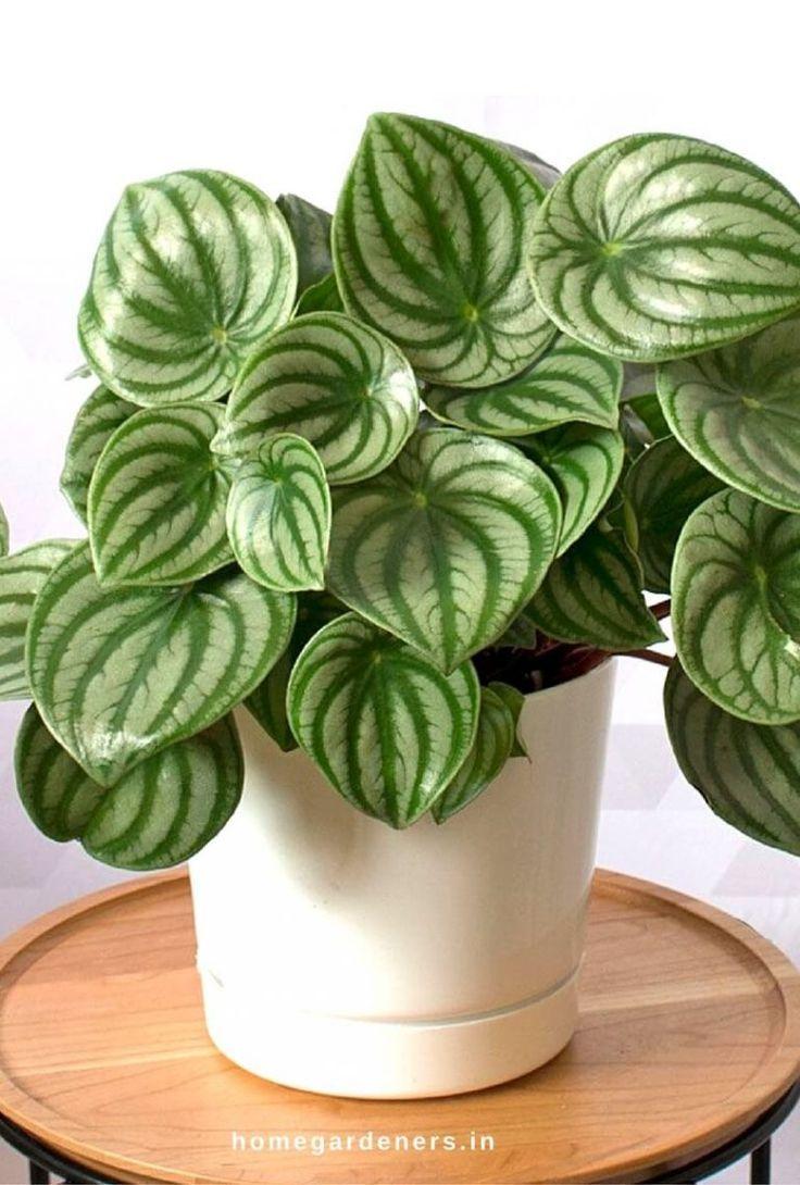 house-plants