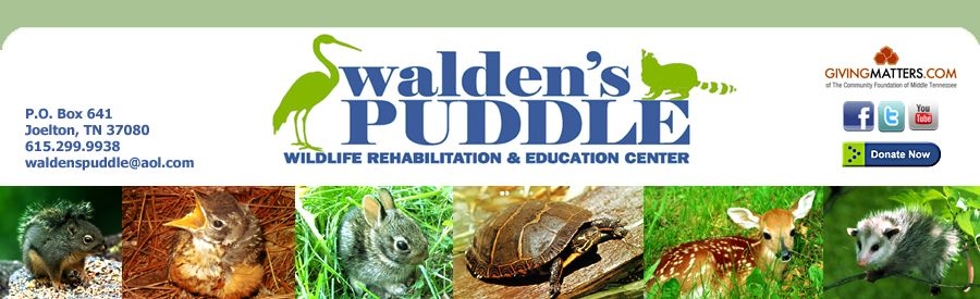 Professionally staffed wildlife rescue, rehabilitation and